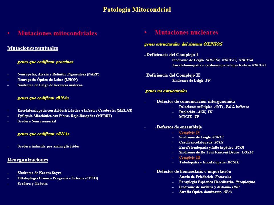 Patología Mitocondrial Mutaciones mitocondriales Mutaciones puntuales genes que codifican proteínas -Neuropatía, Ataxia y Retinitis Pigmentosa (NARP)