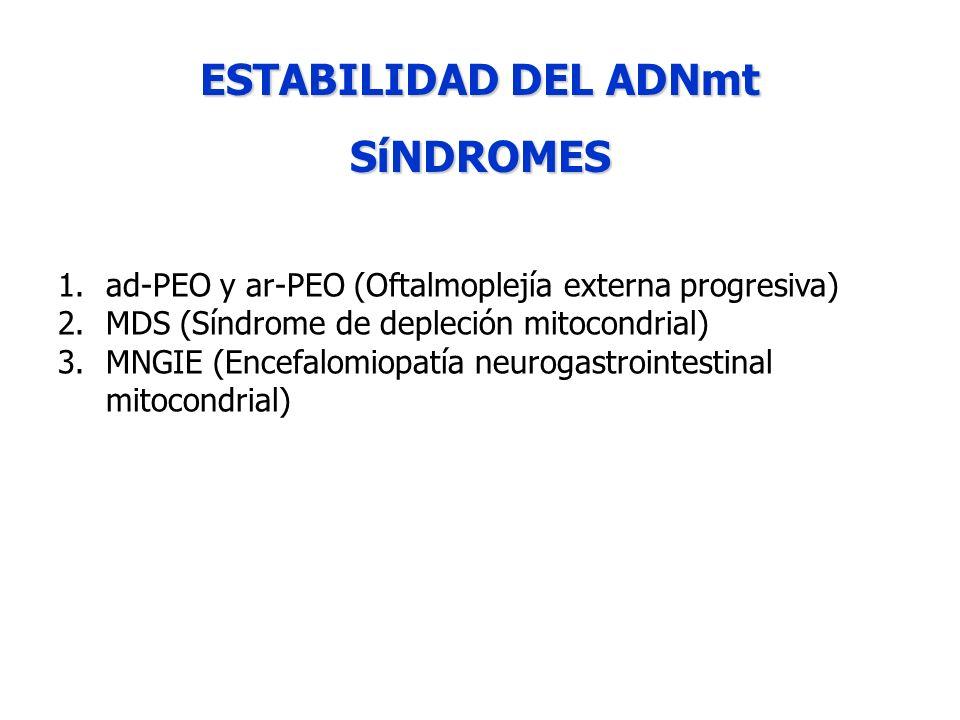 ESTABILIDAD DEL ADNmt SíNDROMES 1.ad-PEO y ar-PEO (Oftalmoplejía externa progresiva) 2.MDS (Síndrome de depleción mitocondrial) 3.MNGIE (Encefalomiopa