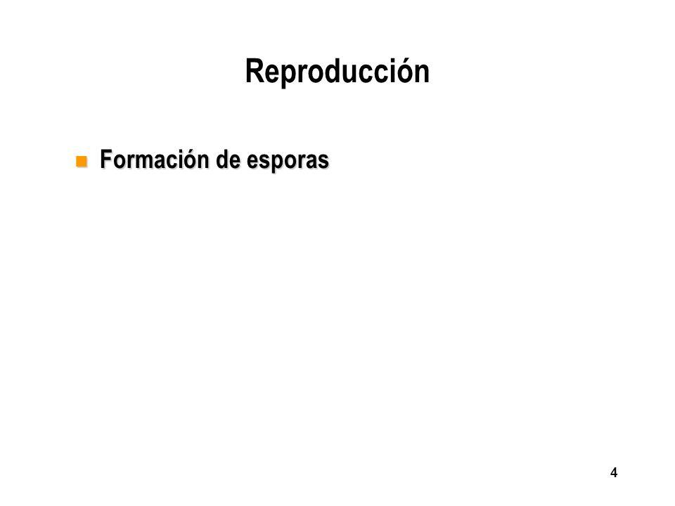 4 Reproducción n Formación de esporas