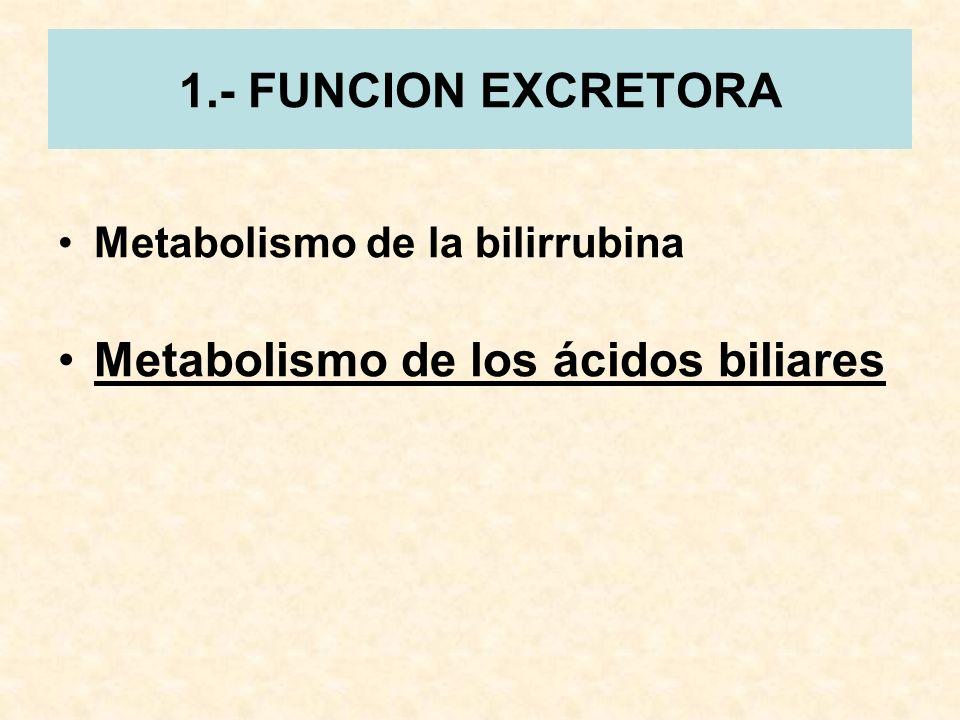 1.- FUNCION EXCRETORA Metabolismo de la bilirrubina Metabolismo de los ácidos biliares