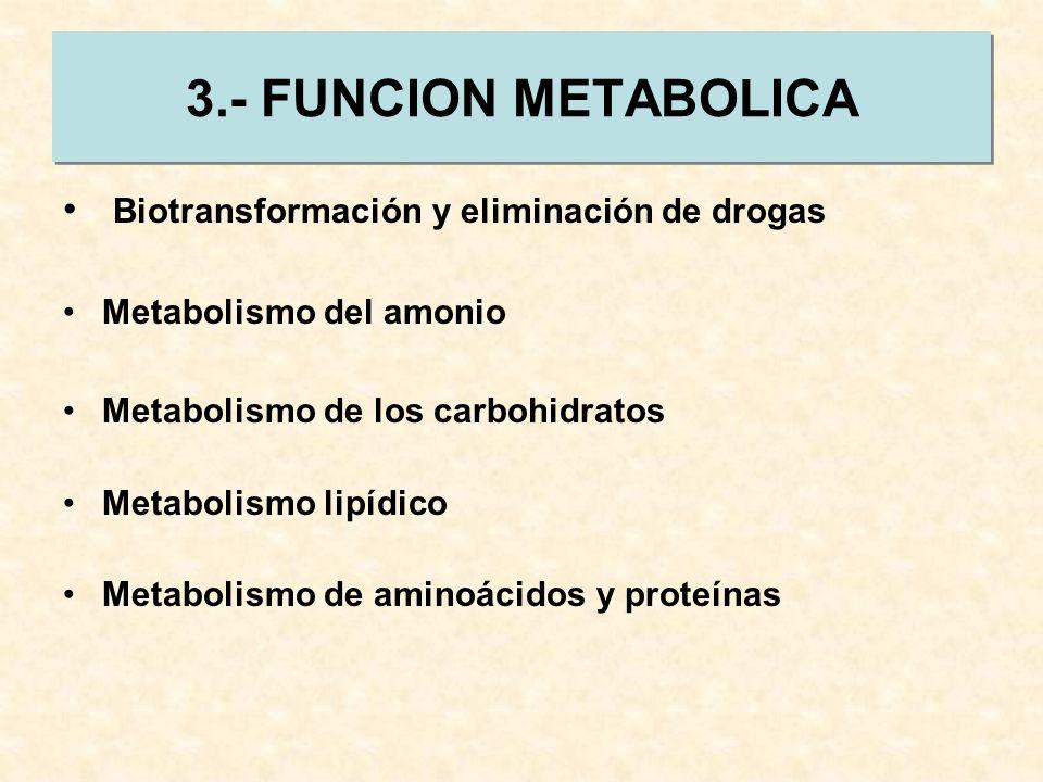 3.- FUNCION METABOLICA Biotransformación y eliminación de drogas Metabolismo del amonio Metabolismo de los carbohidratos Metabolismo lipídico Metaboli