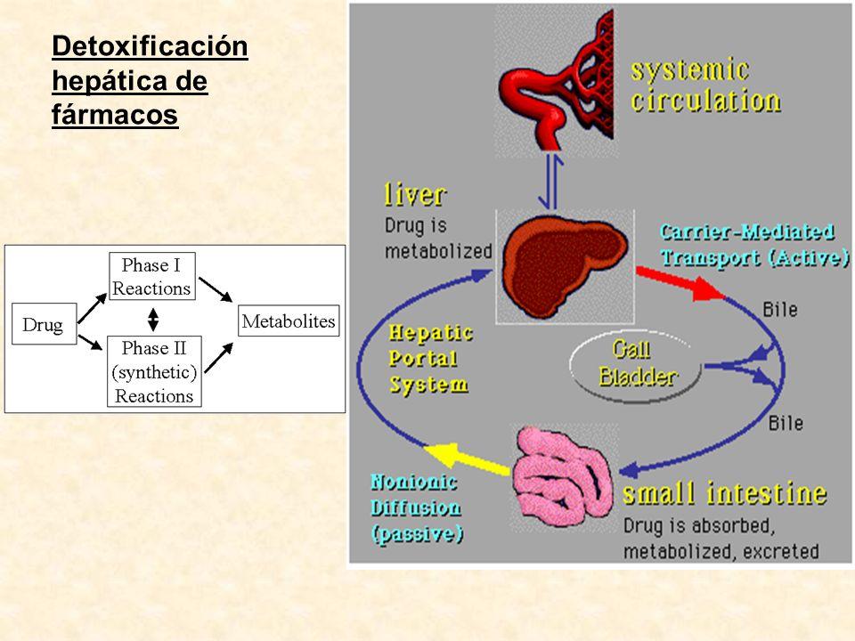 Detoxificación hepática de fármacos
