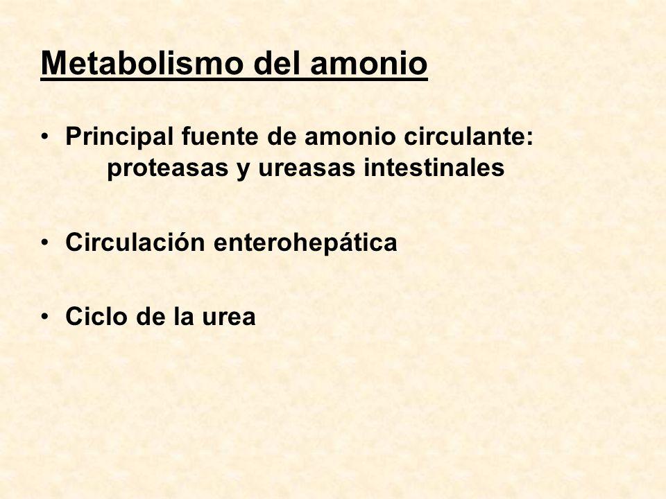 Metabolismo del amonio Principal fuente de amonio circulante: proteasas y ureasas intestinales Circulación enterohepática Ciclo de la urea