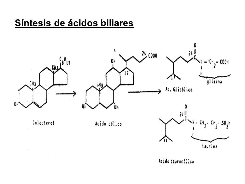 Vida media enzimas hepáticos ALT47 horas AST17 horas ALP9 días GGT4 días