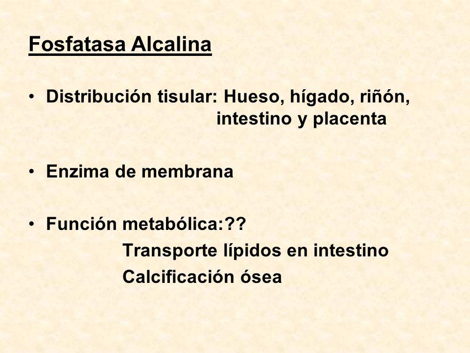 Fosfatasa Alcalina Distribución tisular: Hueso, hígado, riñón, intestino y placenta Enzima de membrana Función metabólica:?? Transporte lípidos en int