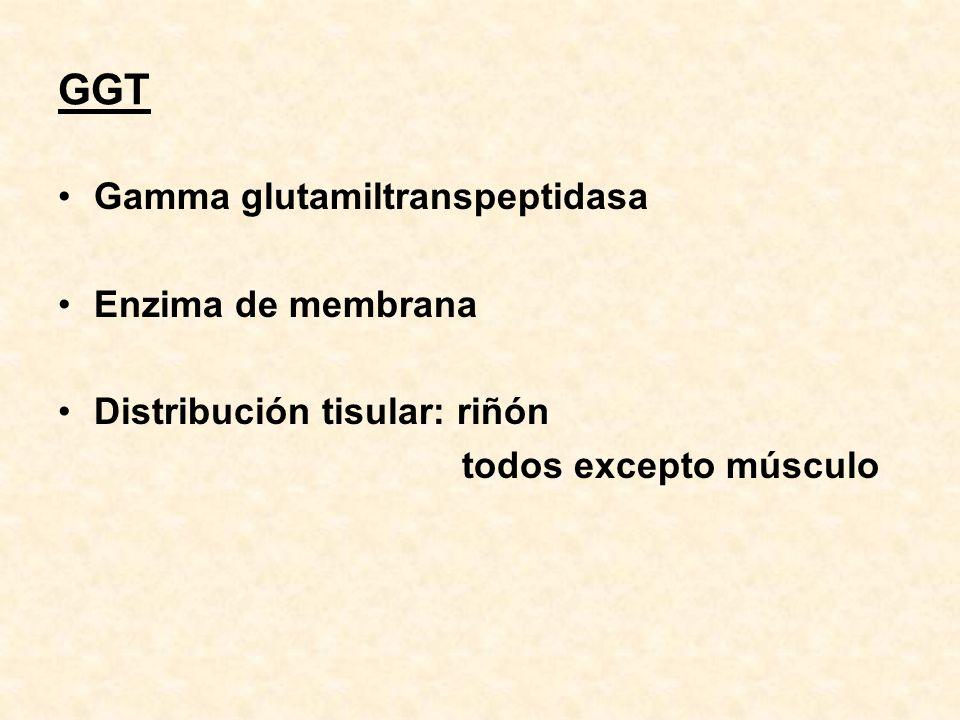 GGT Gamma glutamiltranspeptidasa Enzima de membrana Distribución tisular: riñón todos excepto músculo