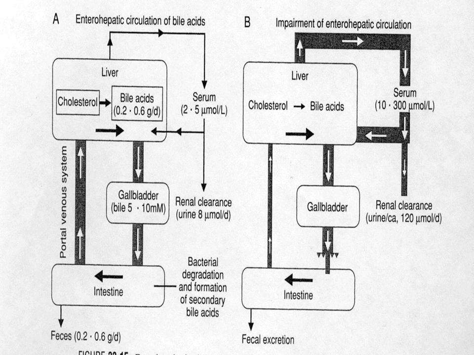 2.- SINTESIS HEPATICA Proteínas plasmáticas Factores de la coagulación Lípidos y lipoproteínas Urea