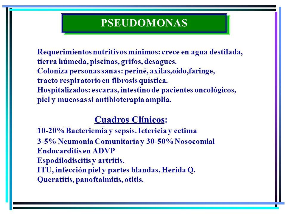 PSEUDOMONAS Requerimientos nutritivos mínimos: crece en agua destilada, tierra húmeda, piscinas, grifos, desagues. Coloniza personas sanas: periné, ax