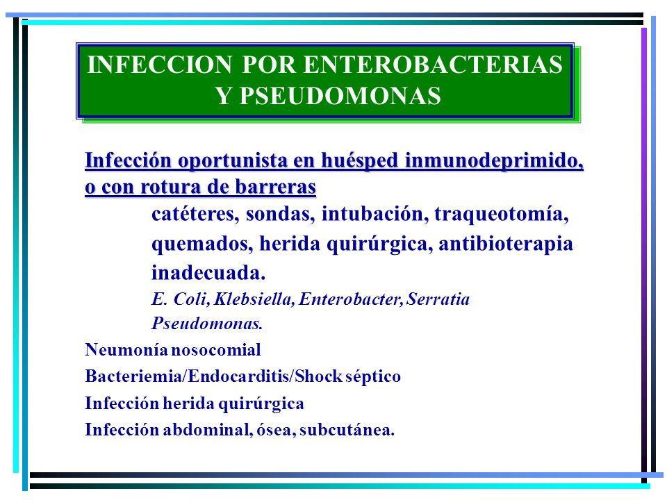INFECCION POR ENTEROBACTERIAS Y PSEUDOMONAS INFECCION POR ENTEROBACTERIAS Y PSEUDOMONAS Infección oportunista en huésped inmunodeprimido, o con rotura