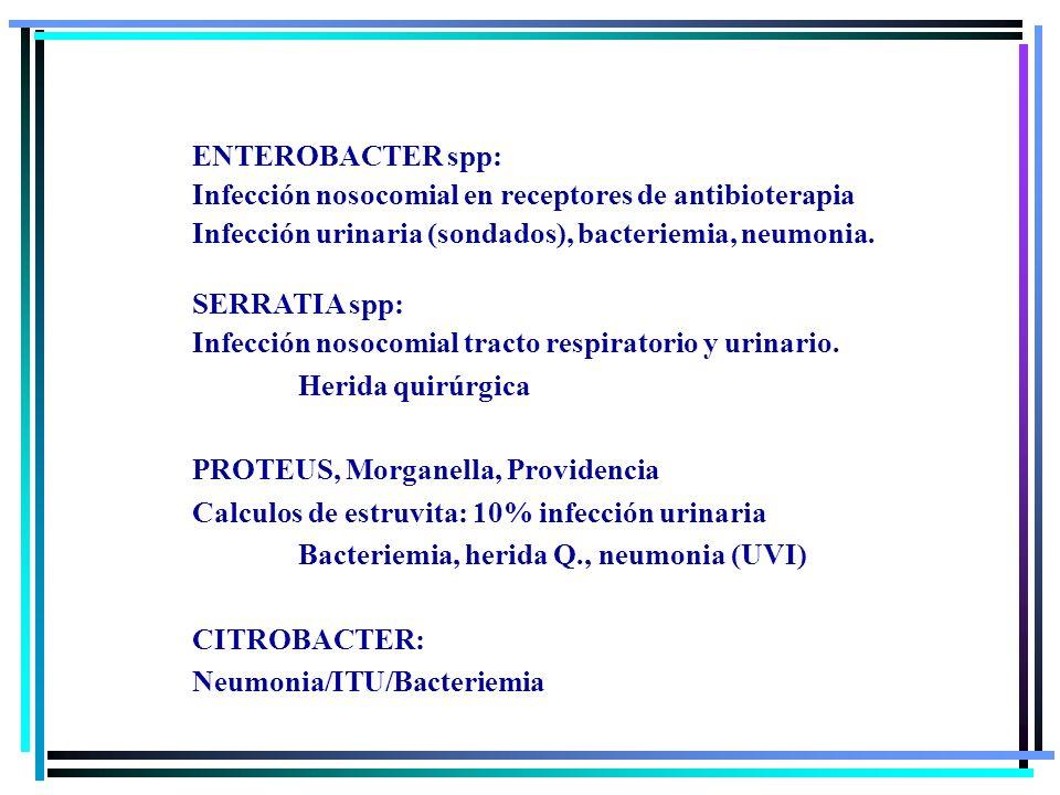 ENTEROBACTER spp: Infección nosocomial en receptores de antibioterapia Infección urinaria (sondados), bacteriemia, neumonia. SERRATIA spp: Infección n