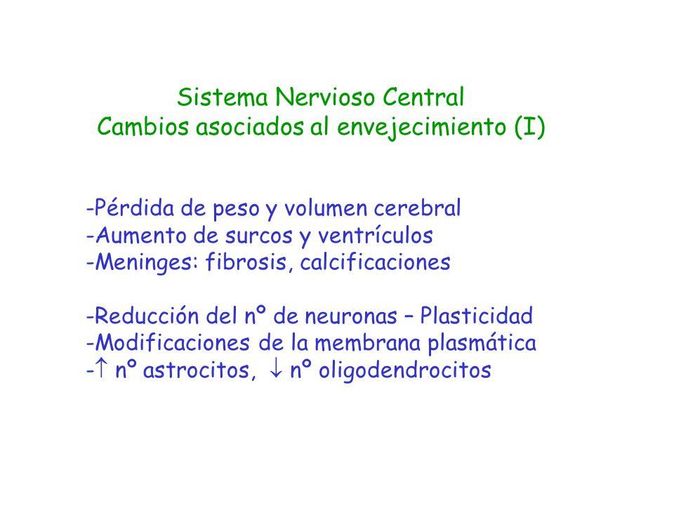 Sistema Nervioso Central Cambios asociados al envejecimiento (I) -Pérdida de peso y volumen cerebral -Aumento de surcos y ventrículos -Meninges: fibro