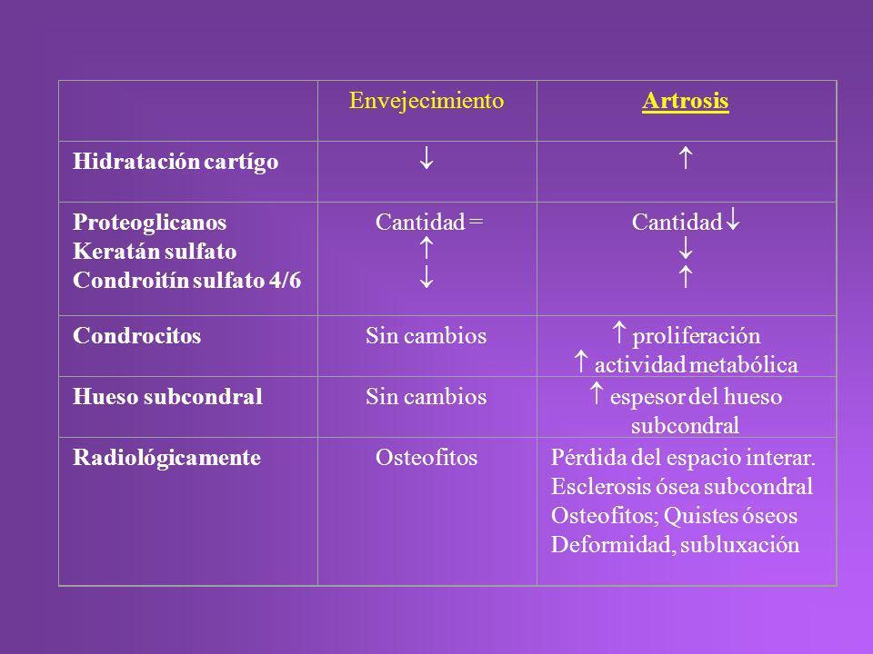 EnvejecimientoArtrosis Hidratación cartígo Proteoglicanos Keratán sulfato Condroitín sulfato 4/6 Cantidad = Cantidad CondrocitosSin cambios proliferac