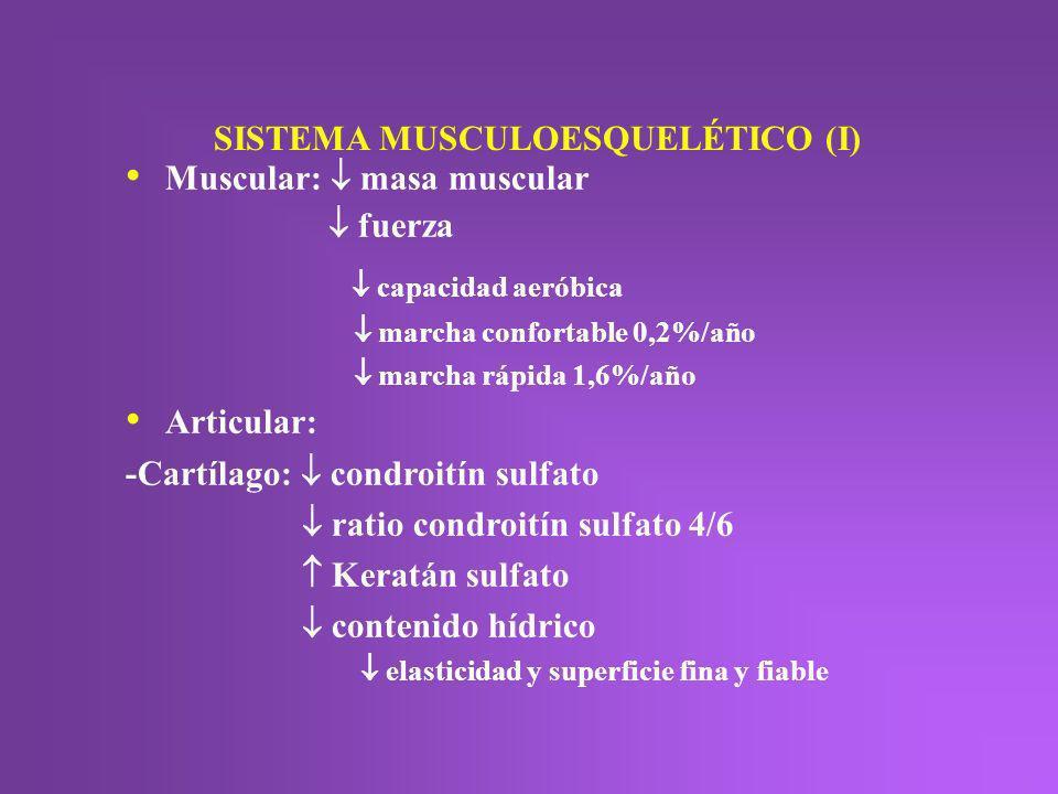 SISTEMA MUSCULOESQUELÉTICO (I) Muscular: masa muscular fuerza capacidad aeróbica marcha confortable 0,2%/año marcha rápida 1,6%/año Articular: -Cartíl