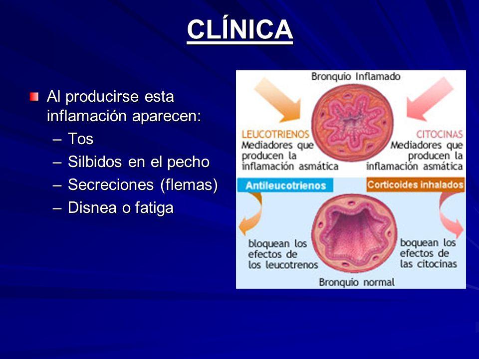 CLÍNICA Al producirse esta inflamación aparecen: –Tos –Silbidos en el pecho –Secreciones (flemas) –Disnea o fatiga