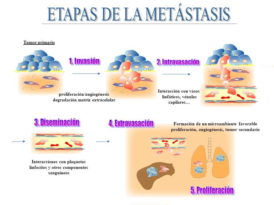 La metástasis se origina en un entorno único, por lo que las comunicaciones entre la célula tumoral y el entorno metastático son cruciales en el desarrollo tumoral secundario.