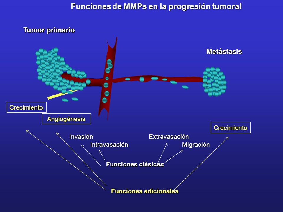 Funciones clásicas IntravasaciónInvasiónExtravasaciónMigración Funciones de MMPs en la progresión tumoral Funciones adicionales Crecimiento Crecimient