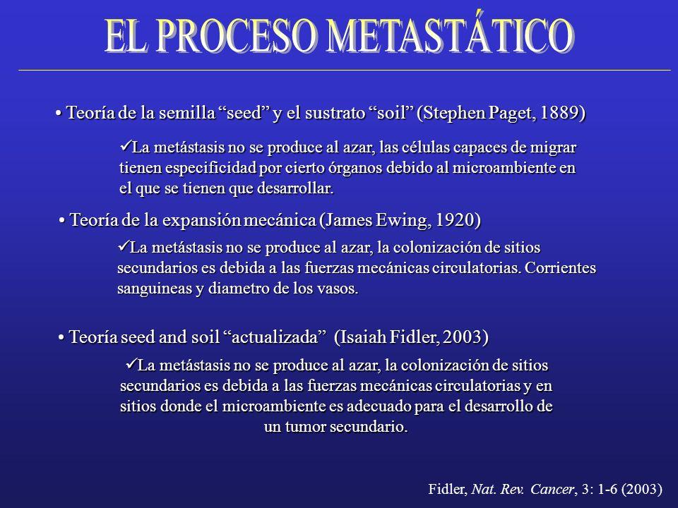 Teoría de la semilla seed y el sustrato soil (Stephen Paget, 1889) Teoría de la semilla seed y el sustrato soil (Stephen Paget, 1889) La metástasis no