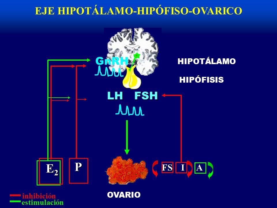 EJE HIPOTÁLAMO-HIPÓFISO-OVARICOFSHLH inhibición estimulación FS I A HIPÓFISIS OVARIO HIPOTÁLAMO P E2E2E2E2 GnRH