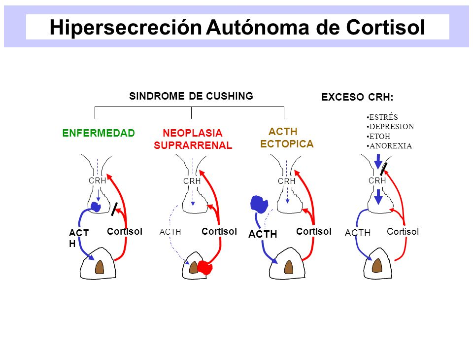 ACT H Cortisol CRH ACTH Cortisol CRH ACTH Cortisol CRH ACTH Cortisol CRH SINDROME DE CUSHING ENFERMEDAD NEOPLASIA SUPRARRENAL ACTH ECTOPICA EXCESO CRH