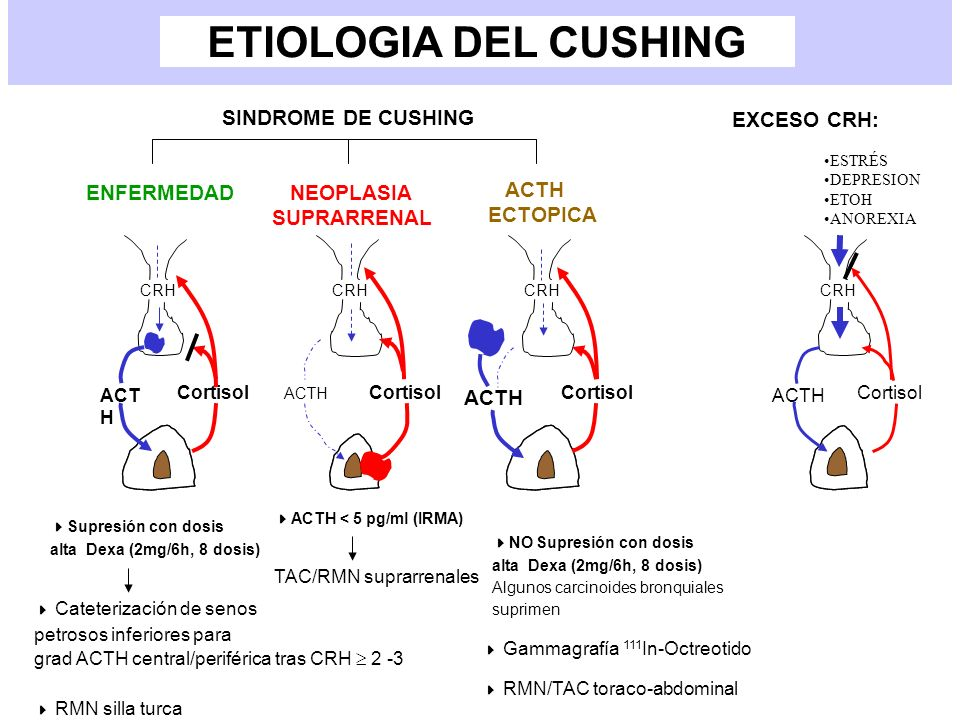 ETIOLOGIA DEL CUSHING ACT H Cortisol CRH ACTH Cortisol CRH ACTH Cortisol CRH ACTH Cortisol CRH SINDROME DE CUSHING ENFERMEDAD NEOPLASIA SUPRARRENAL AC