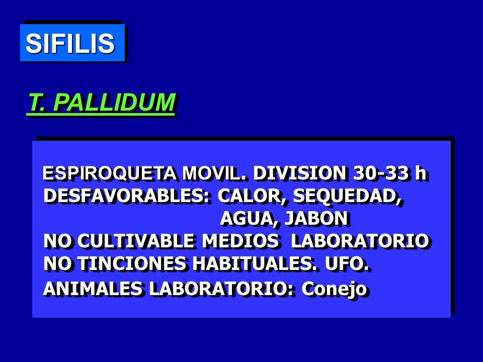 SIFILISSIFILIS S.SECUNDARIA L.