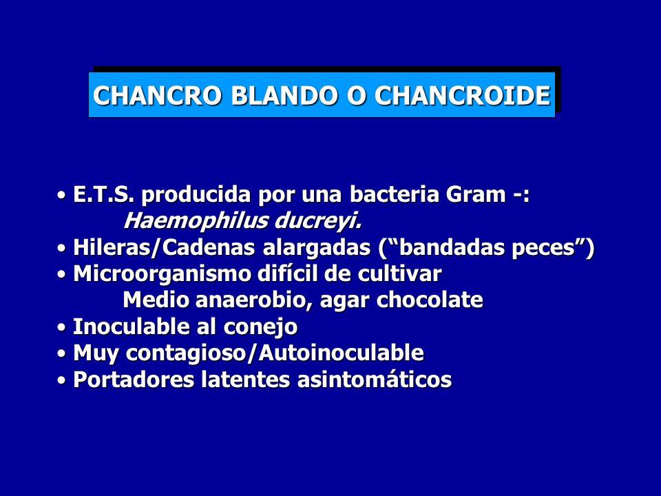 CHANCRO BLANDO O CHANCROIDE E.T.S. producida por una bacteria Gram -: Haemophilus ducreyi. E.T.S. producida por una bacteria Gram -: Haemophilus ducre