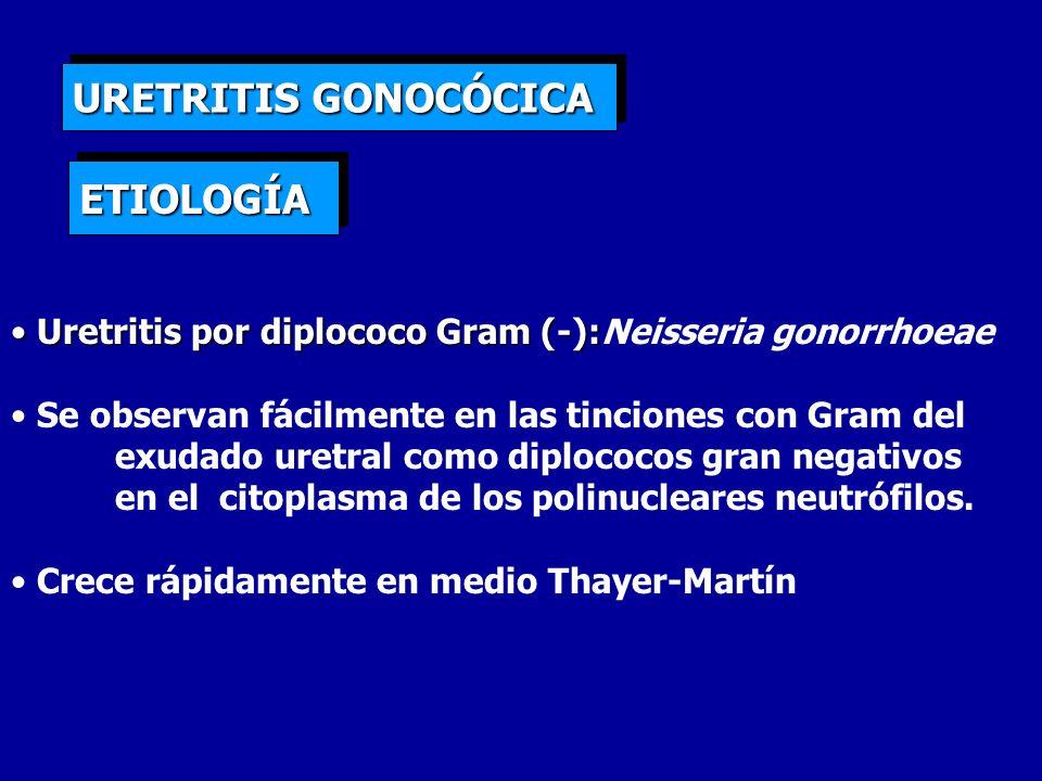 URETRITIS GONOCÓCICA Uretritis por diplococo Gram (-): Uretritis por diplococo Gram (-):Neisseria gonorrhoeae Se observan fácilmente en las tinciones