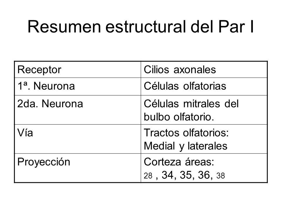 Resumen estructural del Par I ReceptorCilios axonales 1ª. NeuronaCélulas olfatorias 2da. NeuronaCélulas mitrales del bulbo olfatorio. VíaTractos olfat