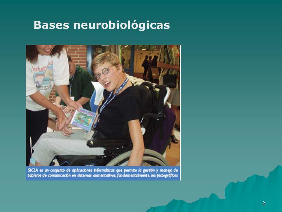 2 Bases neurobiológicas