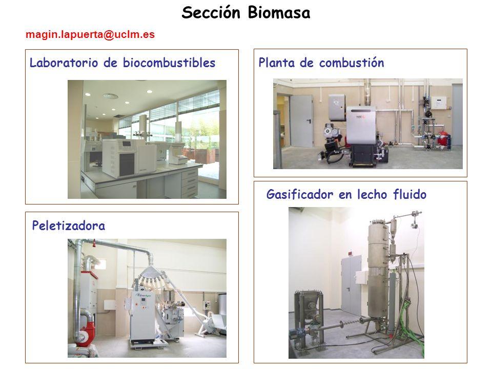 Sección Biomasa Laboratorio de biocombustibles Peletizadora Planta de combustión Gasificador en lecho fluido magin.lapuerta@uclm.es