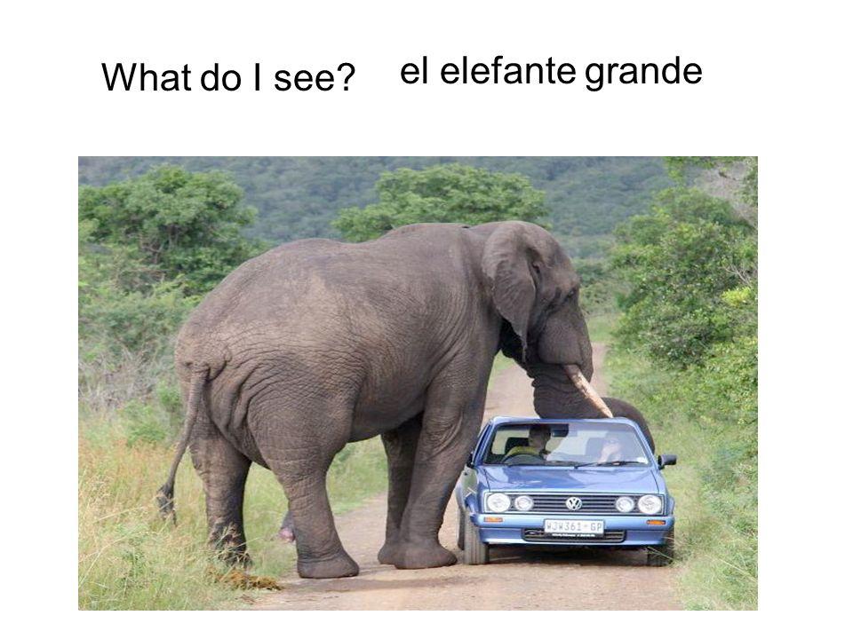 What do I see? el elefante grande
