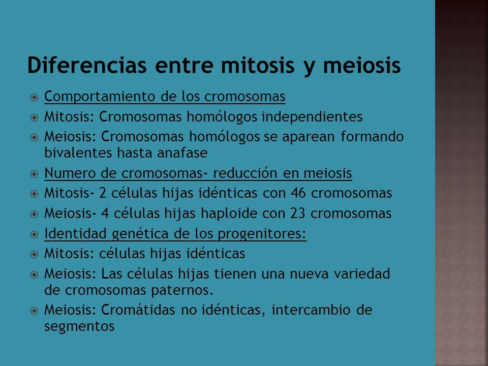 Comportamiento de los cromosomas Mitosis: Cromosomas homólogos independientes Meiosis: Cromosomas homólogos se aparean formando bivalentes hasta anafa