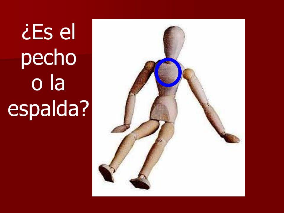 ¿Es el pecho o la espalda?
