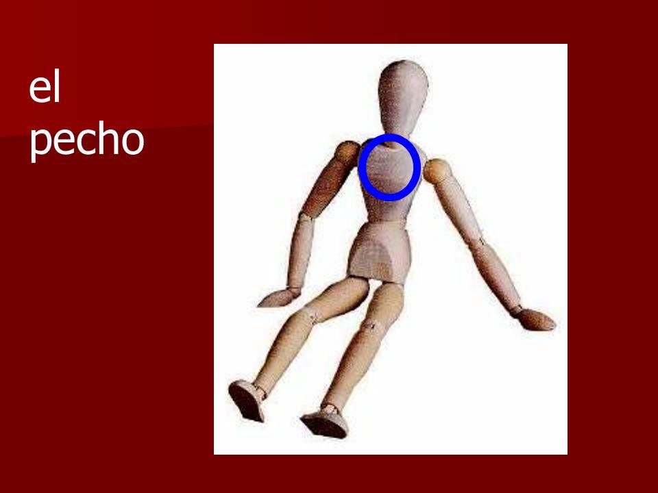 ¿Son las piernas o los brazos?