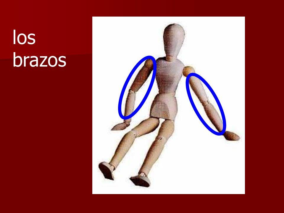 ¿Son los brazos o los hombros?