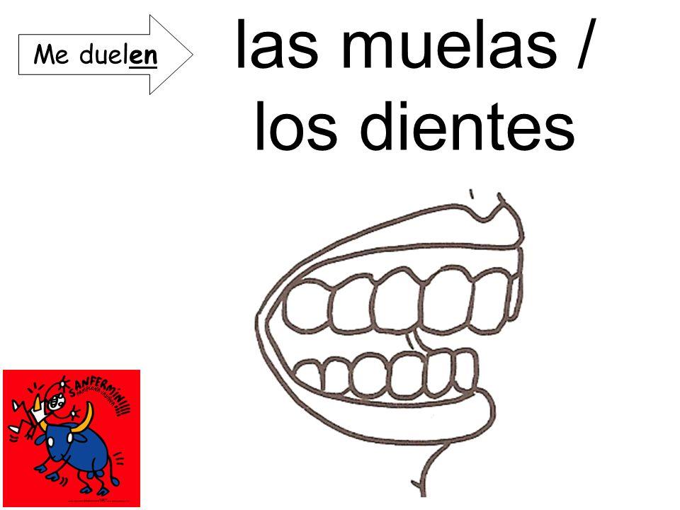 las muelas / los dientes