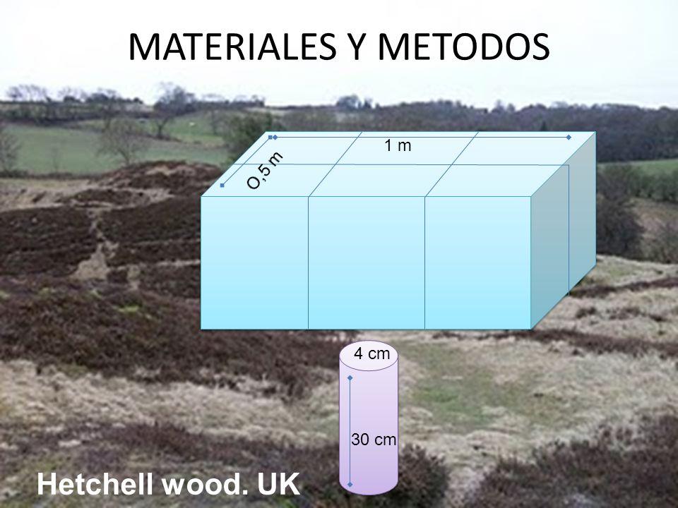 MATERIALES Y METODOS 1 m 30 cm 4 cm Hetchell wood. UK
