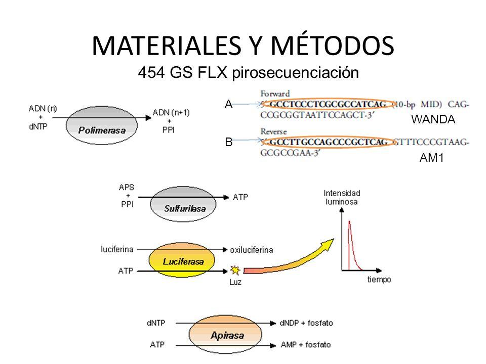 MATERIALES Y MÉTODOS 454 GS FLX pirosecuenciación A B WANDA AM1