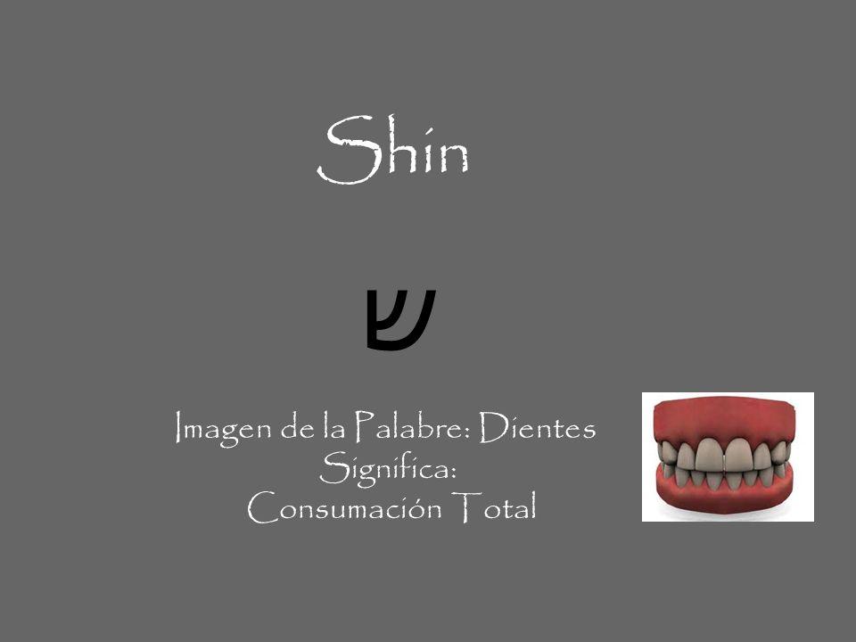 Shin ש Imagen de la Palabre: Dientes Significa: Consumación Total