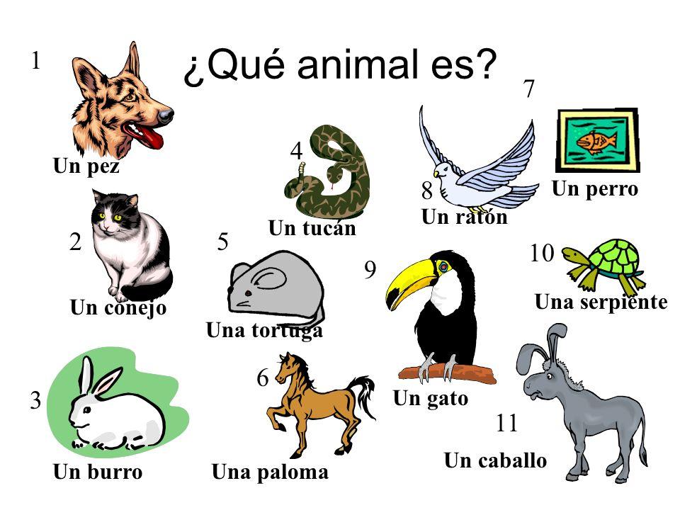 Los animales… 1 2 3 4 5 6 9 8 10 11 7