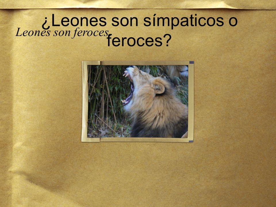 ¿Quieres visitar los leones en el zoológico del Bronx? Sí, quiero visitar los leones en el zoológico.