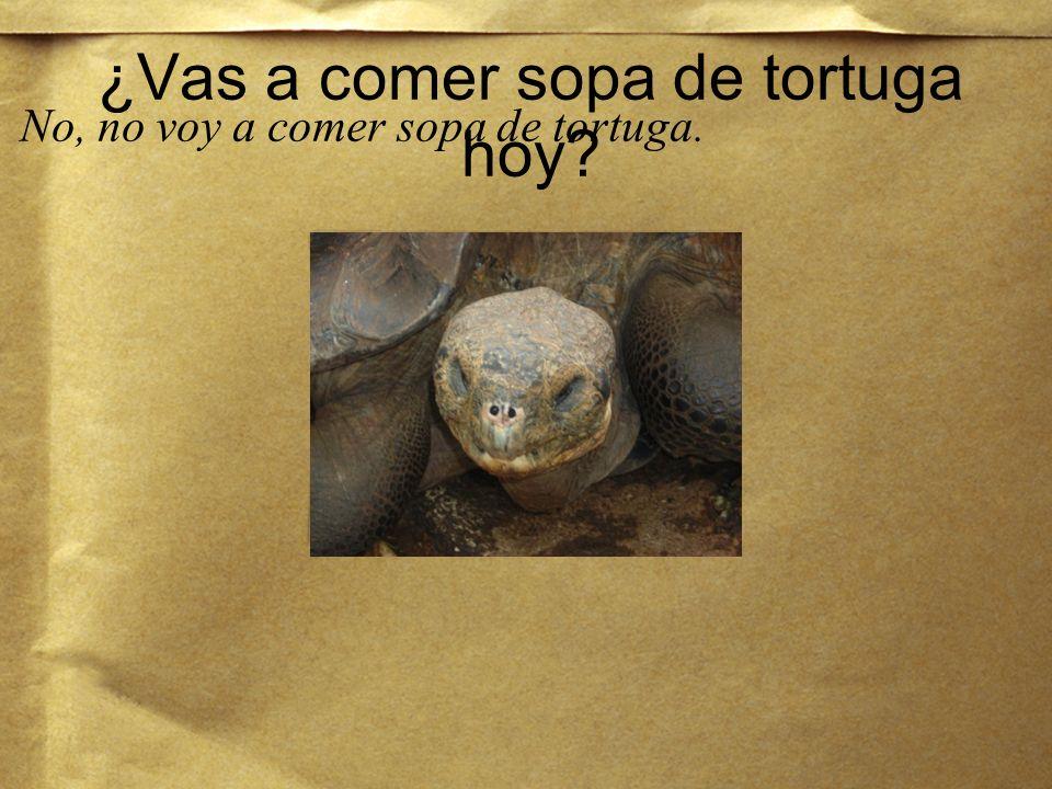 ¿Qué es? Es una tortuga.