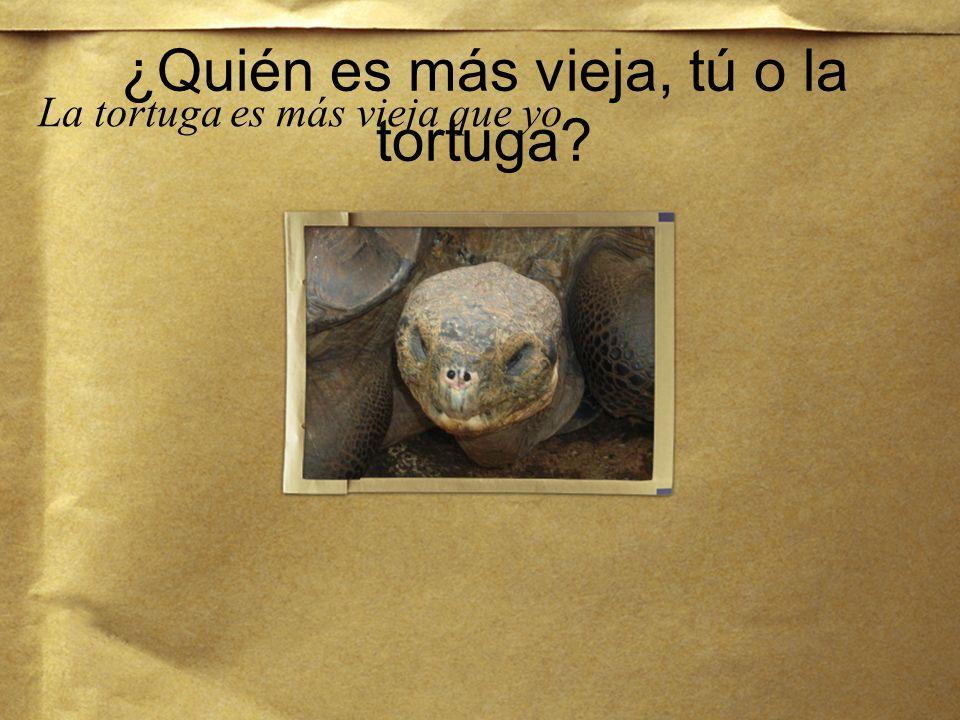 ¿Cuántos años tiene la tortuga? La tortuga tiene muchos años.