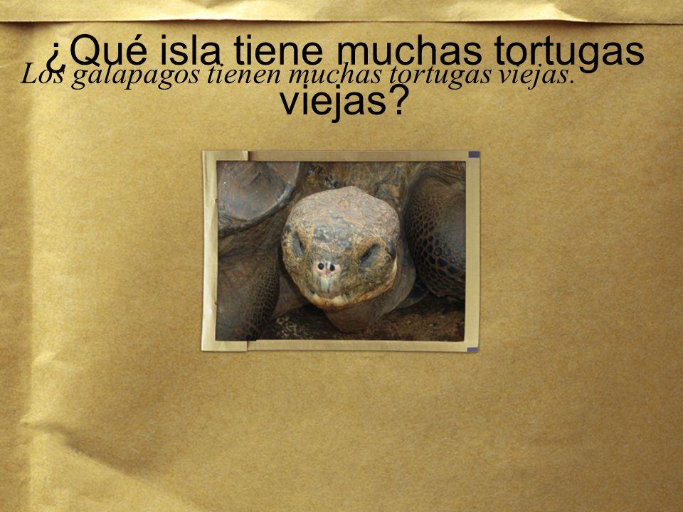 ¿Quién es más vieja, tú o la tortuga? La tortuga es más vieja que yo.