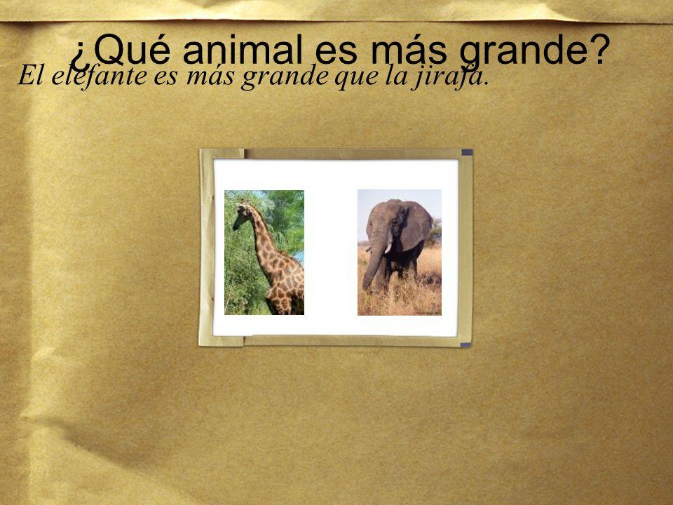¿Qué animal es más alto? La jirafa es más alta.