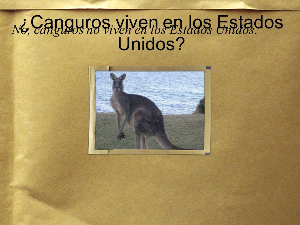 ¿Dónde viven canguros? Canguros viven en Australia.