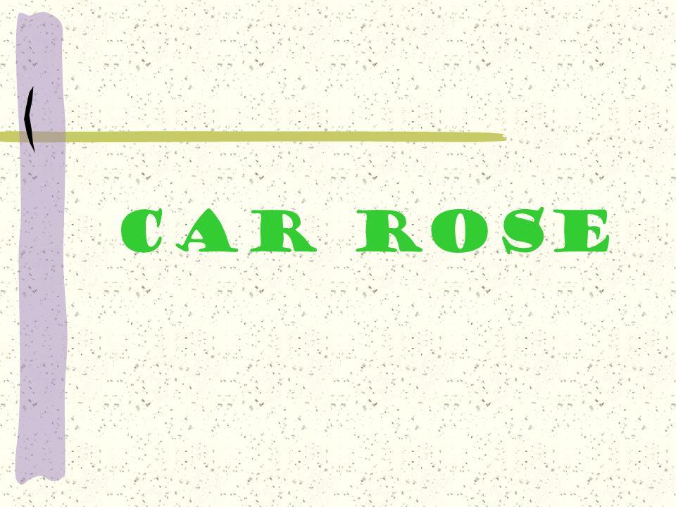 cAR Rose