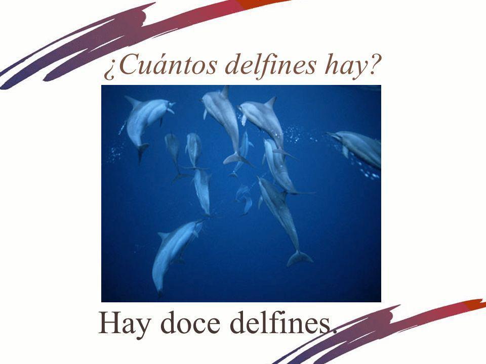 ¿Cuántos delfines hay? Hay doce delfines.