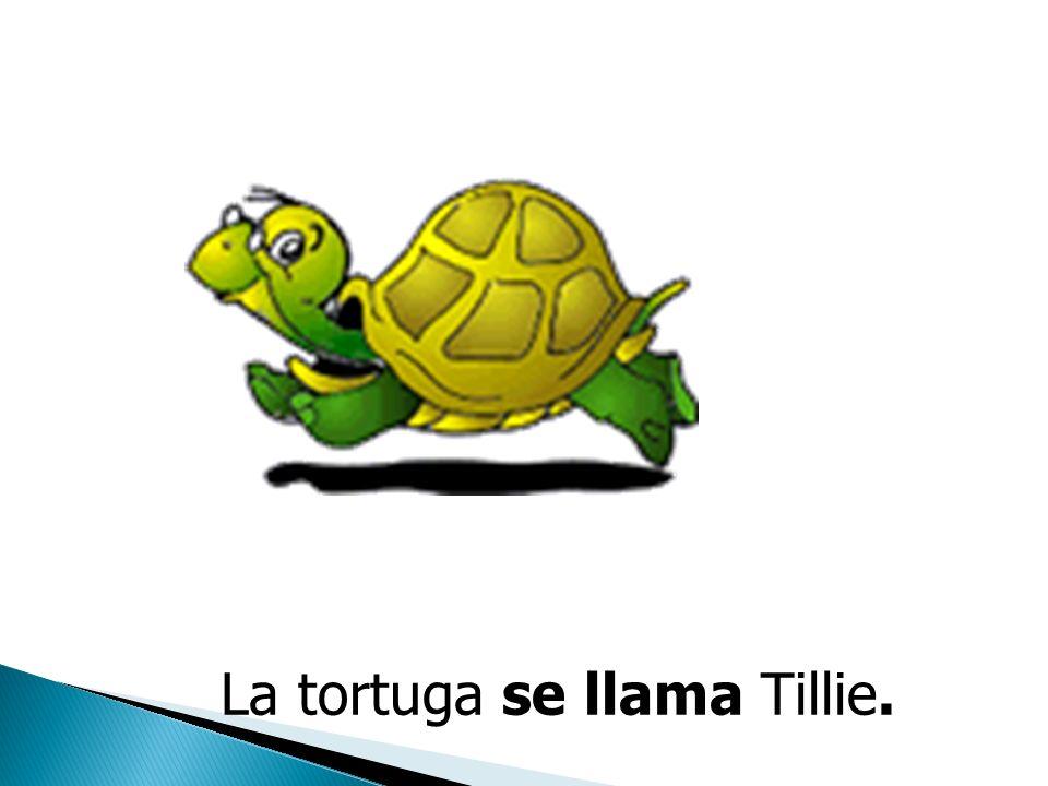 La Tortuga La tortuga se llama Tillie. La Tortuga La tortuga se llama Tillie. Tillie, La Tortuga
