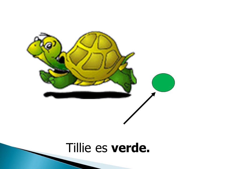 La Tortuga La tortuga se llama Tillie. La Tortuga La tortuga se llama Tillie.